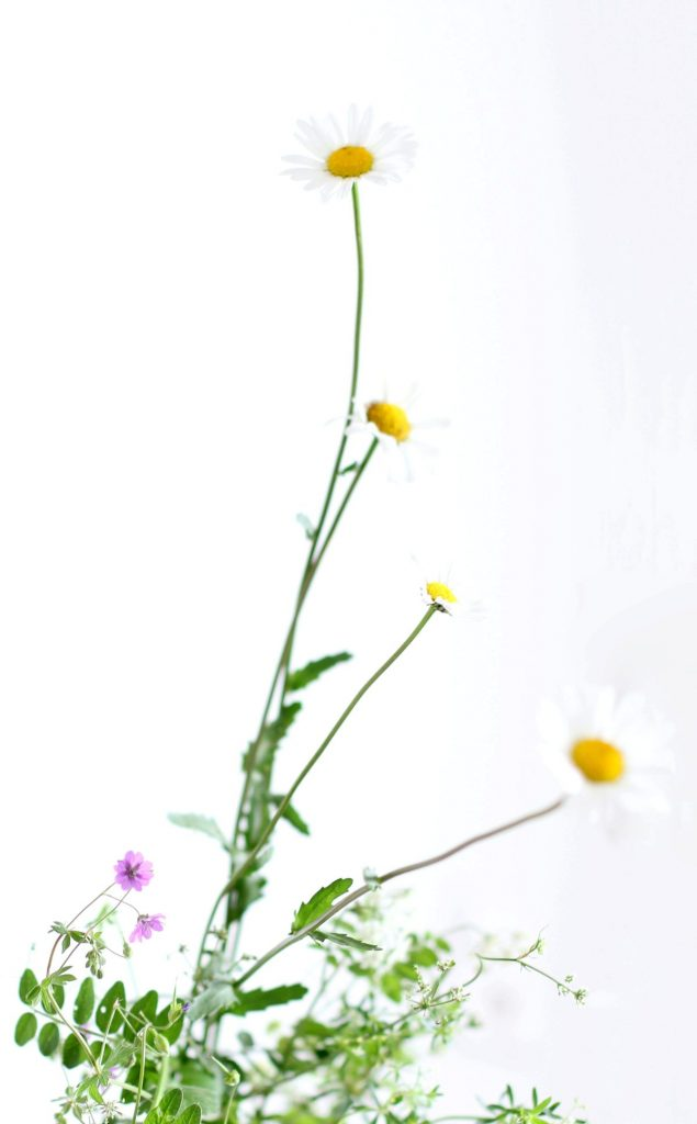 Selection-of-wild-flowers-illustrating-about-tracey-of-Tracey-Griffin-flowers